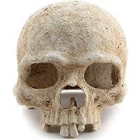 MerryNine Reptile Vivarium Decoration Human Skull Hide Cave Nest Aquarium Underwater Ornament