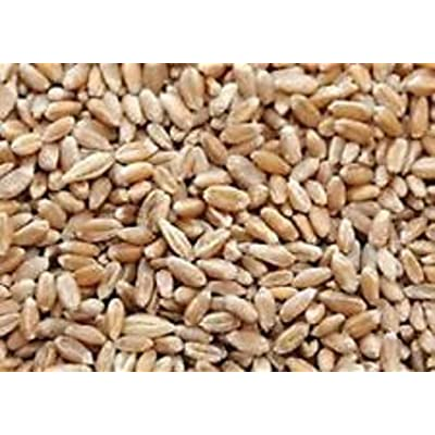 Chemical Free Hard Red Wheat Seed - 5 Lbs - Plant & Grow Wheatgrass, Flour, Grain & Bread, Emergency Preparation Food Storage - Excellent Germination : Plant Seed And Flower Products : Garden & Outdoor