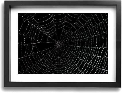 Gyxwcnm Spider Web Framed Mounted Canvas Wall Art Prints Wall Graffiti Art Prints On Canvas 30 40 Cm 12 16 Inch Perfect New Year Gift For Kitchen Or Bedroom Amazon Co Uk Kitchen Home
