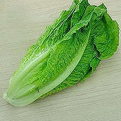 Lettuce- Romaine- Parris Island - 100 Seeds : Garden & Outdoor