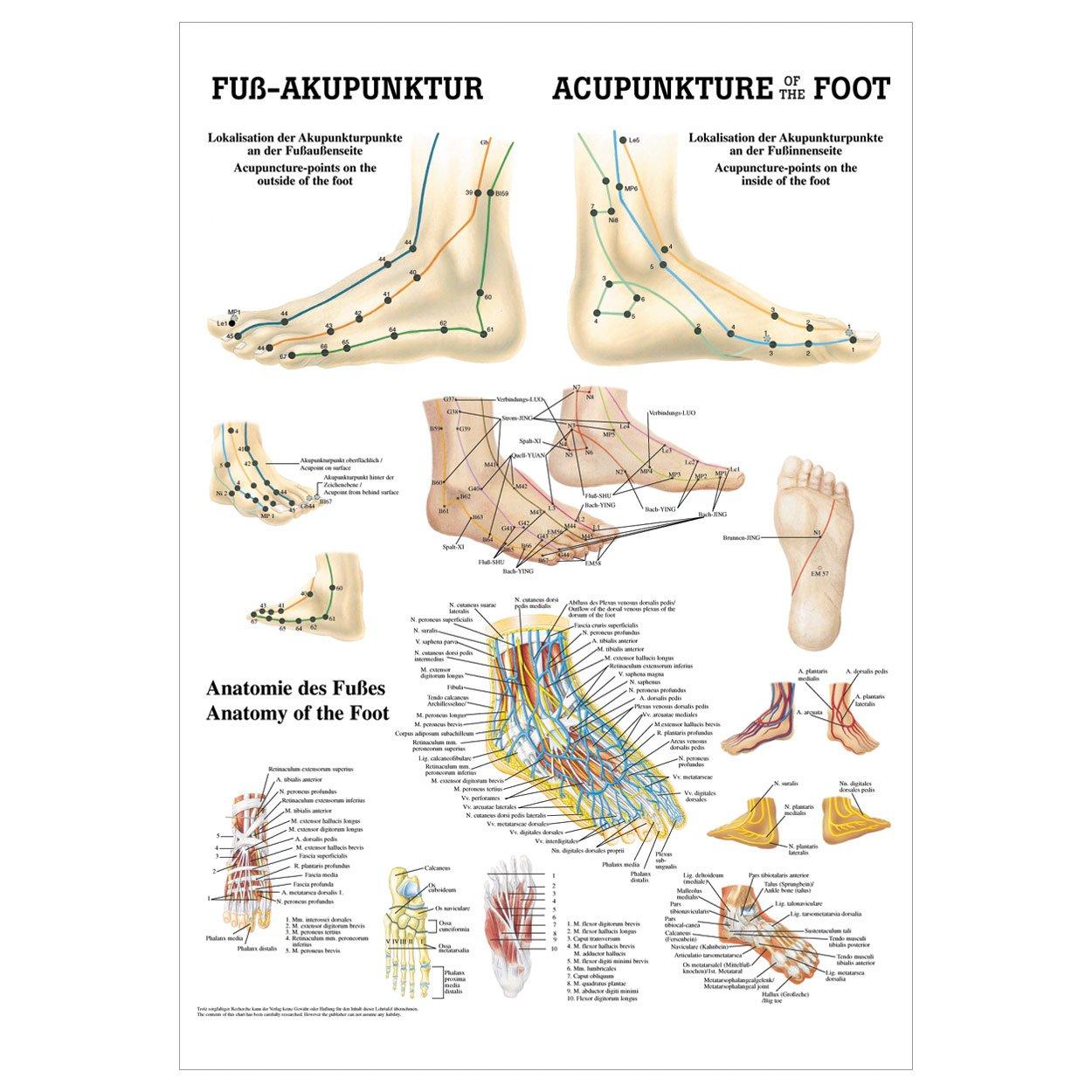 Gemütlich Fuß Bilder Anatomie Fotos - Menschliche Anatomie Bilder ...