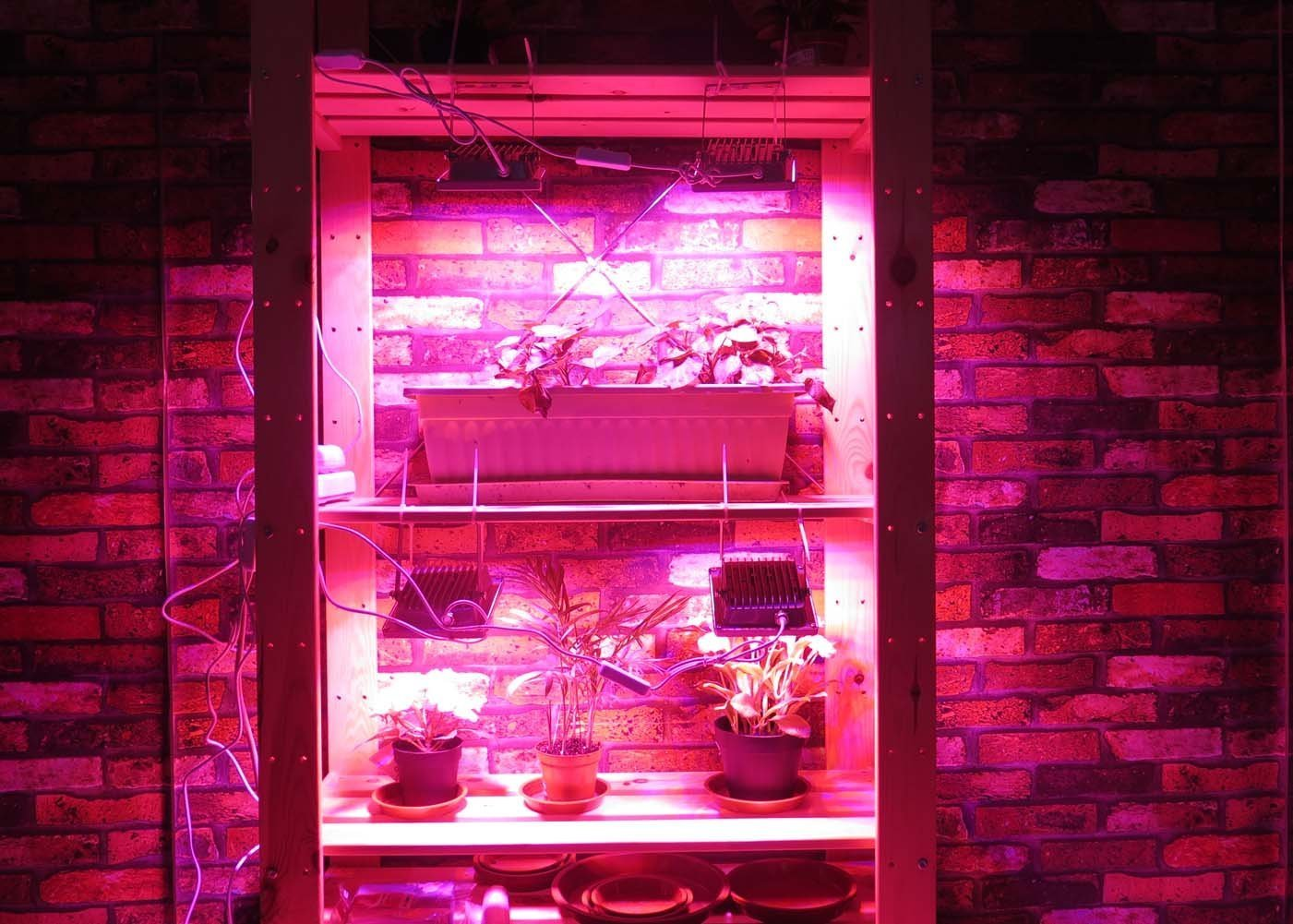 ACKE LED Grow Lights Full Spectrum,Plant Lights,Growing lamps 12W for Indoor plants,Hydropoincs by ACKE (Image #2)