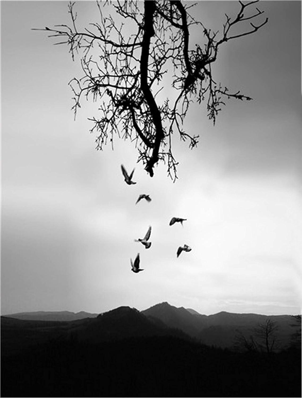 N/V Rompecabezas para Adultos, pájaros y árboles Muertos Rompecabezas, Juegos de Rompecabezas para la Familia, Rompecabezas de cartón, Rompecabezas de desafío Cerebral para niños-500 Piezas
