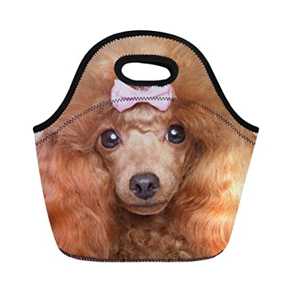HUGS IDEA Cute Poodle Puppy Print Insulated Neoprene Lunch Bag Kids  Reusable Lunchbox Tote