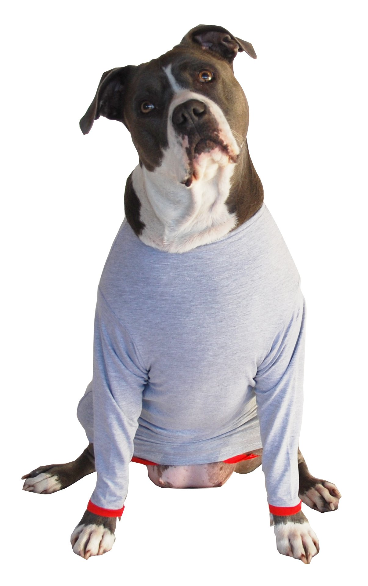 Post Operative Protection Shirt for Dogs (Medium) by POPforPETS