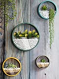 Modern Indoor Succulent Planter Metal Iron Circle