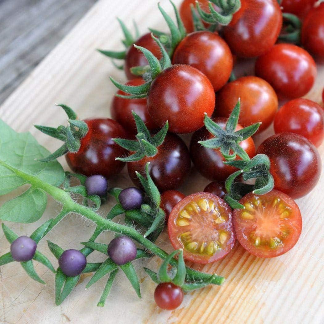 ADOLENB Seed House - 50/100 unidades Semillas de tomates cherry carne semillas de tomate hortalizas semillas de frutas de alto rendimiento perennes resistentes para jardín balcón/terraza