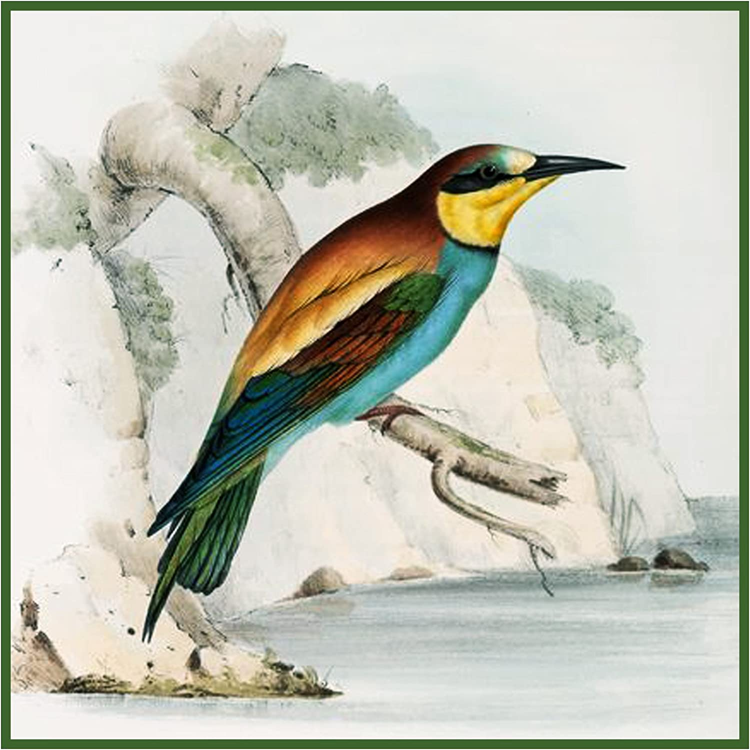 Orenco Originals Bee Eater by Naturalist John Gould Birds Counted Cross Stitch Pattern