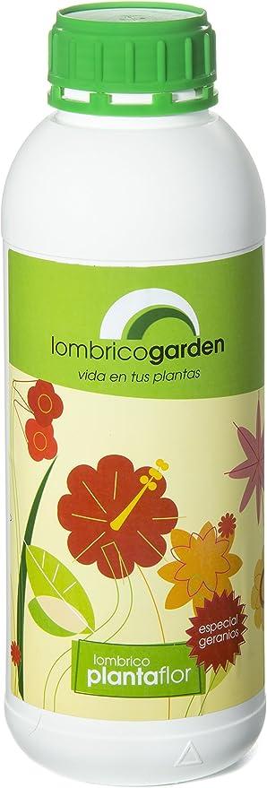 Lombrico Garden Planta Flor 1L: Amazon.es: Jardín