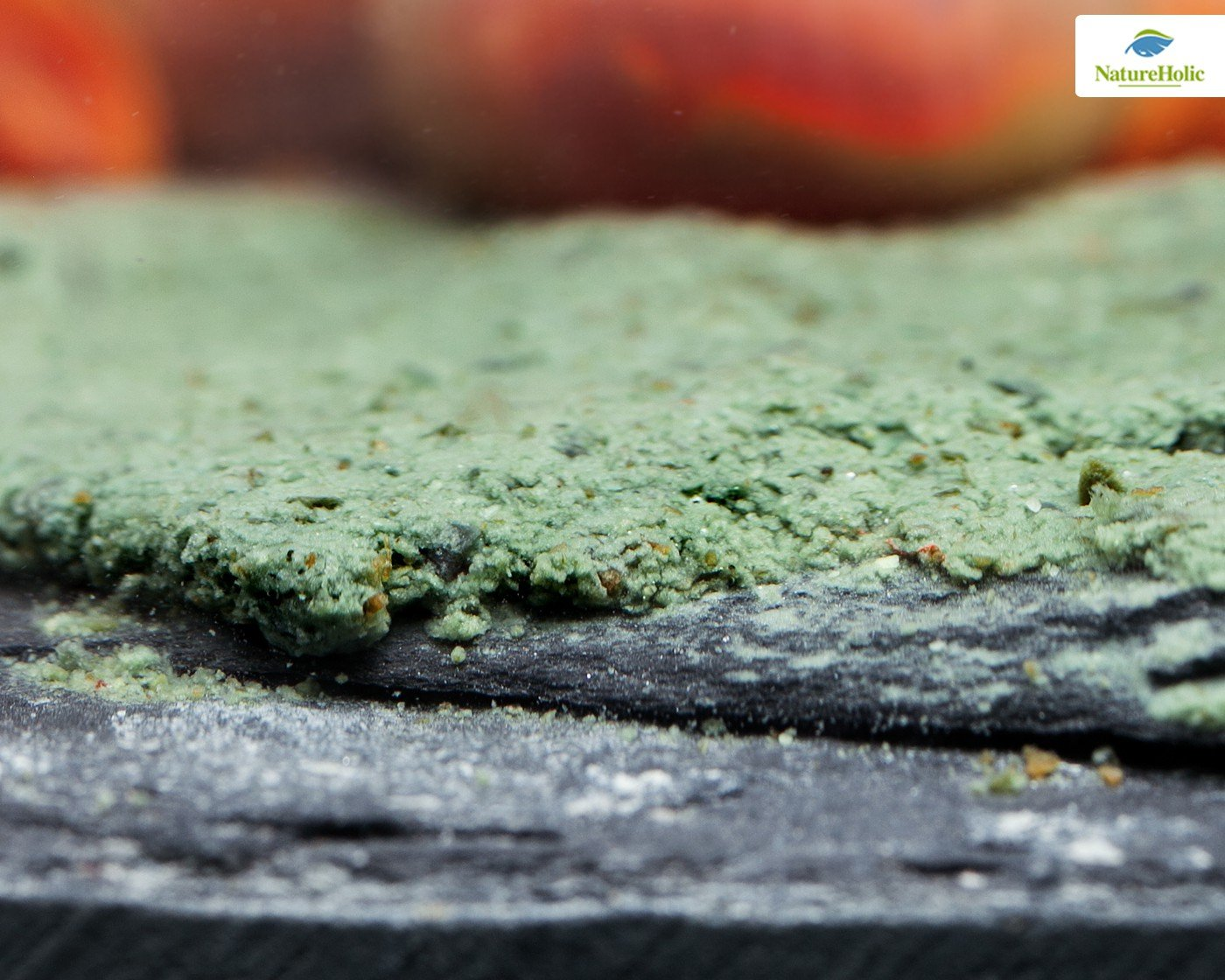 natural eholic Caracol Feed Power de pasta - 30 G - para caracoles en acuario: Amazon.es: Productos para mascotas