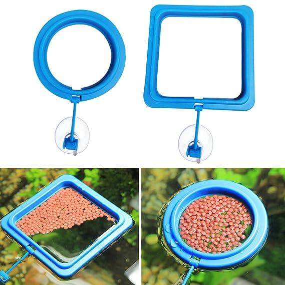 UxradG Anillo de plástico para acuario o pecera, con forma de círculo, para alimentar alimentos flotantes: Amazon.es: Productos para mascotas