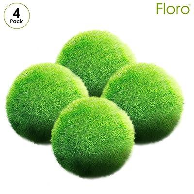 Floro Large Marimo Moss Balls