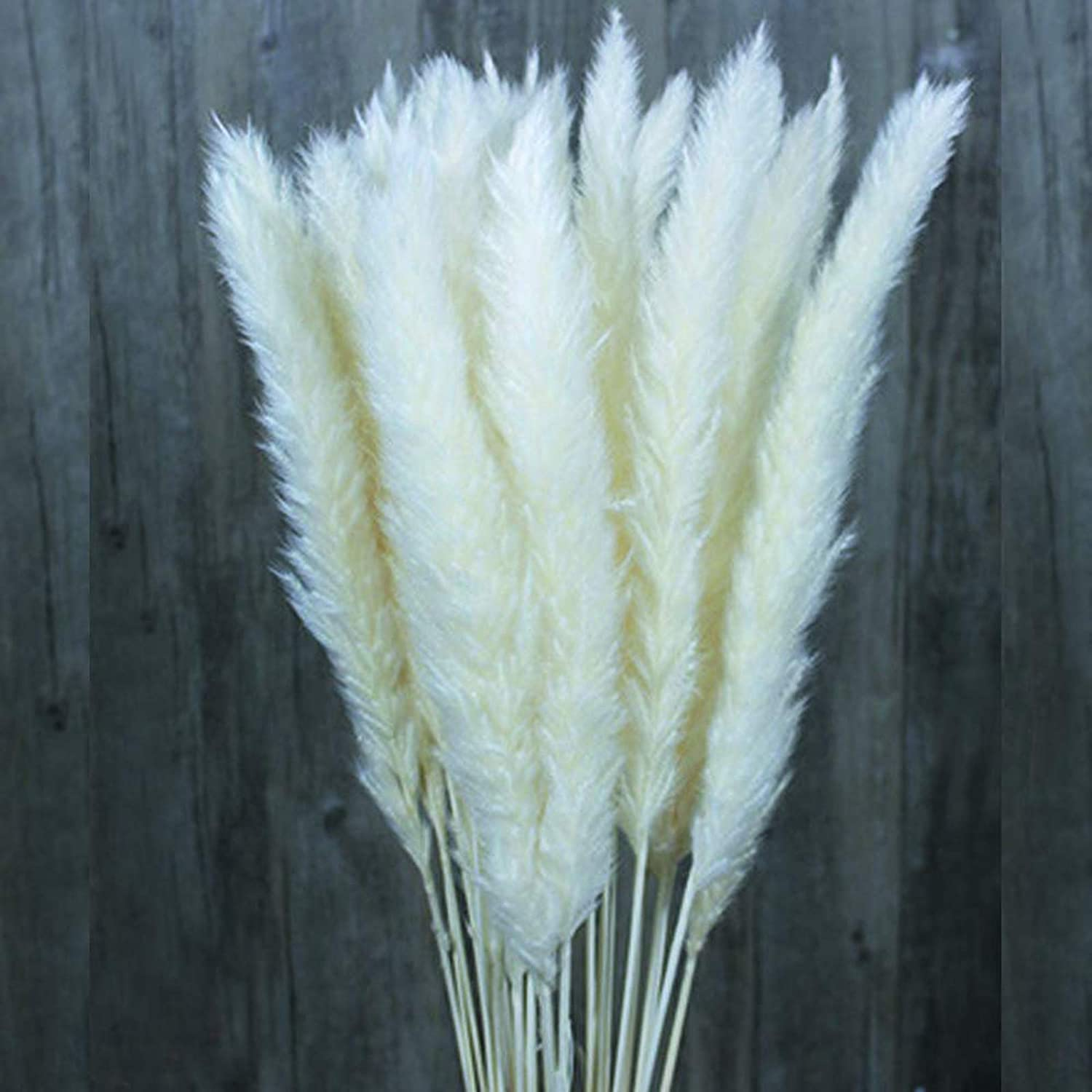 30/60 Pcs Natural Dried Flowers Pampas Grass,Wedding Flower Bunch,Phragmites Communis Bouquet for Floral Arrangements Home Decor (White, 60pcs)