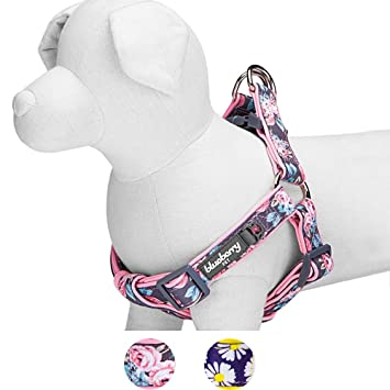 Blueberry Pet Soft & Comfy Step-in Rose Flower Prints y Padded ...