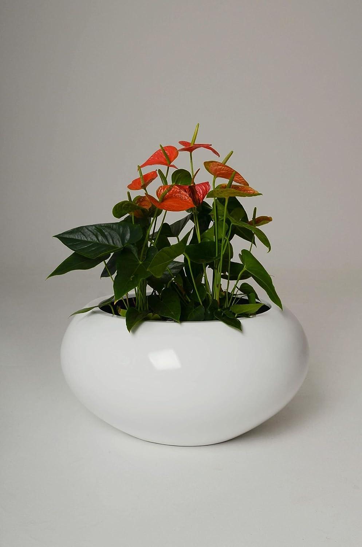 Pflanzschale Blumenschale Trion aus Fiberglas, Ø72cm, Weiß Hochglanz
