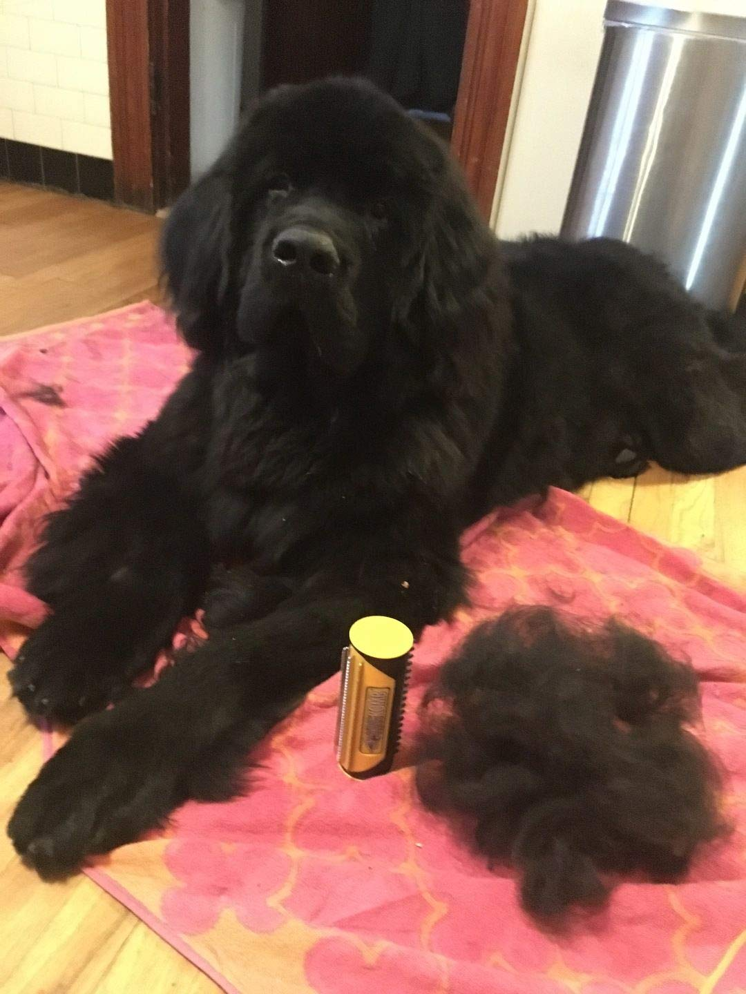 King Komb Dog Shedding Brush - Ultimate Deshedding Tool For Pets - Help Reduce Dog Shedding by King Kanine