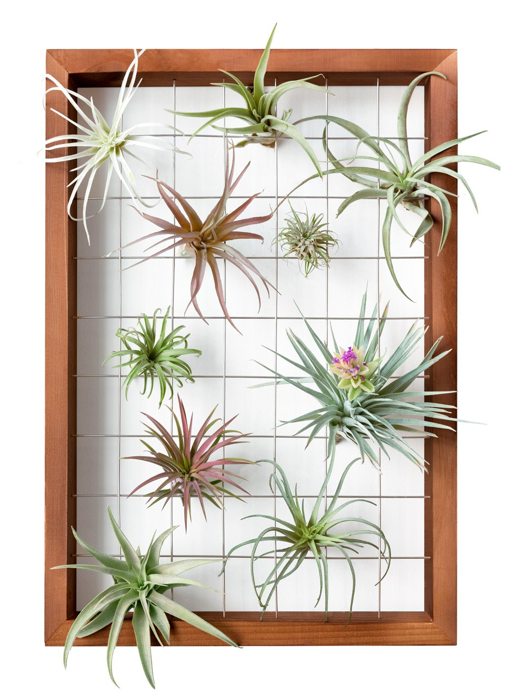 Mkono Large Air Plant Frame Hanging Airplant Holder Tillandsia Display  Hanger Wooden Shelf Wall Decor for House Plants, Succulent, 16,Inch