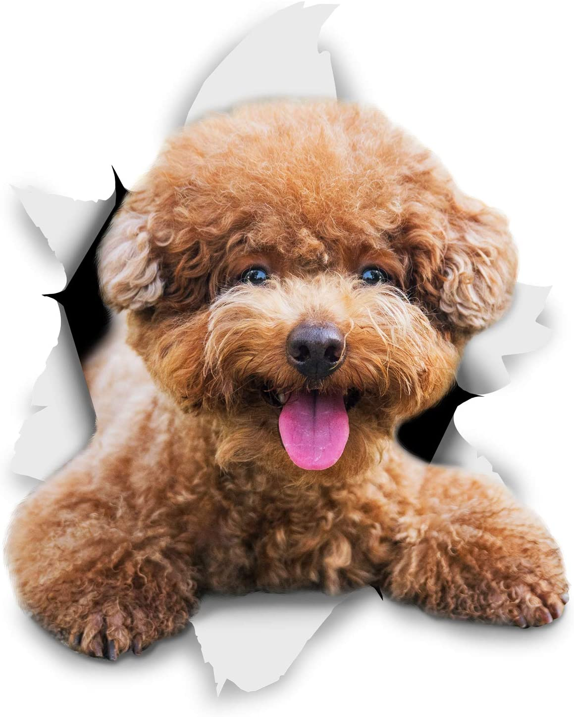 Winston & Bear 3D Dog Stickers - 2 Pack - Smiling Brown Poodle for Wall, Fridge, Toilet and More - Retail Packaged Brown Poodle Dog Stickers