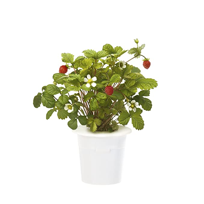 1 opinioni per Click & Grow 4742793007410 Strawberry Refill 3-Pack, Verde, 7x7x21 cm