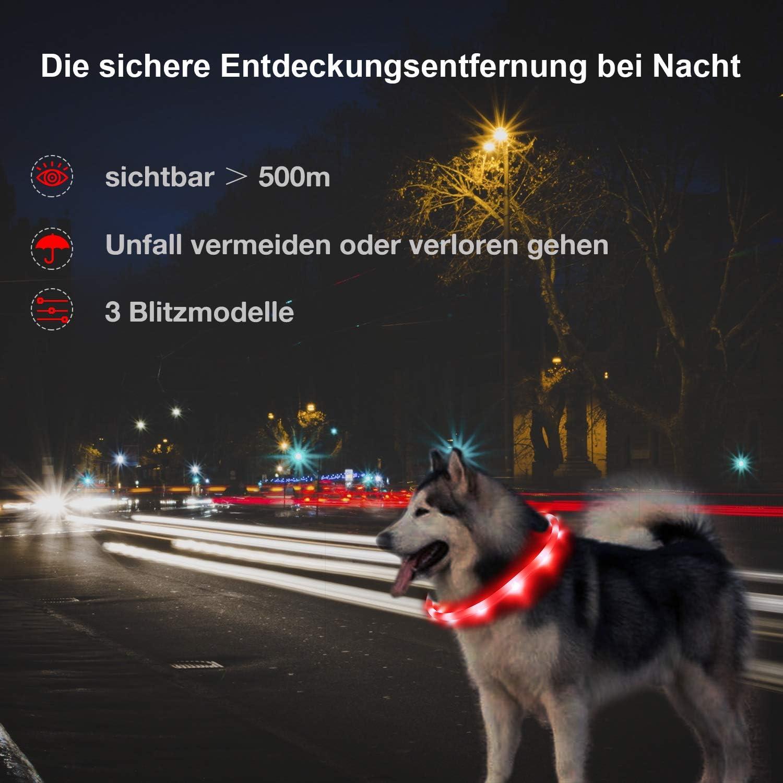 Toozey LED Collar de Perro luz LED - luz Continua Durante 20 Horas ...