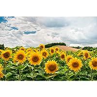 Classic Jigsaw Puzzle, Sunflower Field Landscape, Adult Children's Educational Leisure Toys, 500/1000/1500/2000/3000…