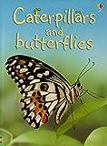 Caterpillars and Butterflies (Beginners)