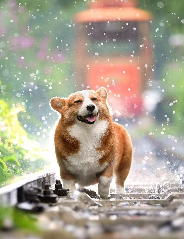 Notebook Pets Dog Corgi Cute Welsh Corgi Royalty Royal Wild Pages Press 9781689245128 Amazon Com Books