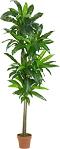 Nearly Natural 6596 6ft. Dracaena Silk Plant (Real Touch),Green