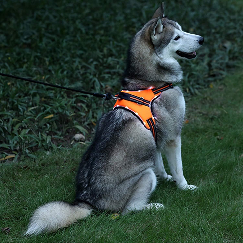 orange,LED M,LED orange,LED M,LED TerriTrophy LED Dog Harness, USB Rechargeable No Pull Reflective Pet Harness Adjustable Outdoor Pet Vest Easy Control for Small Medium Large Dogs, orange, M
