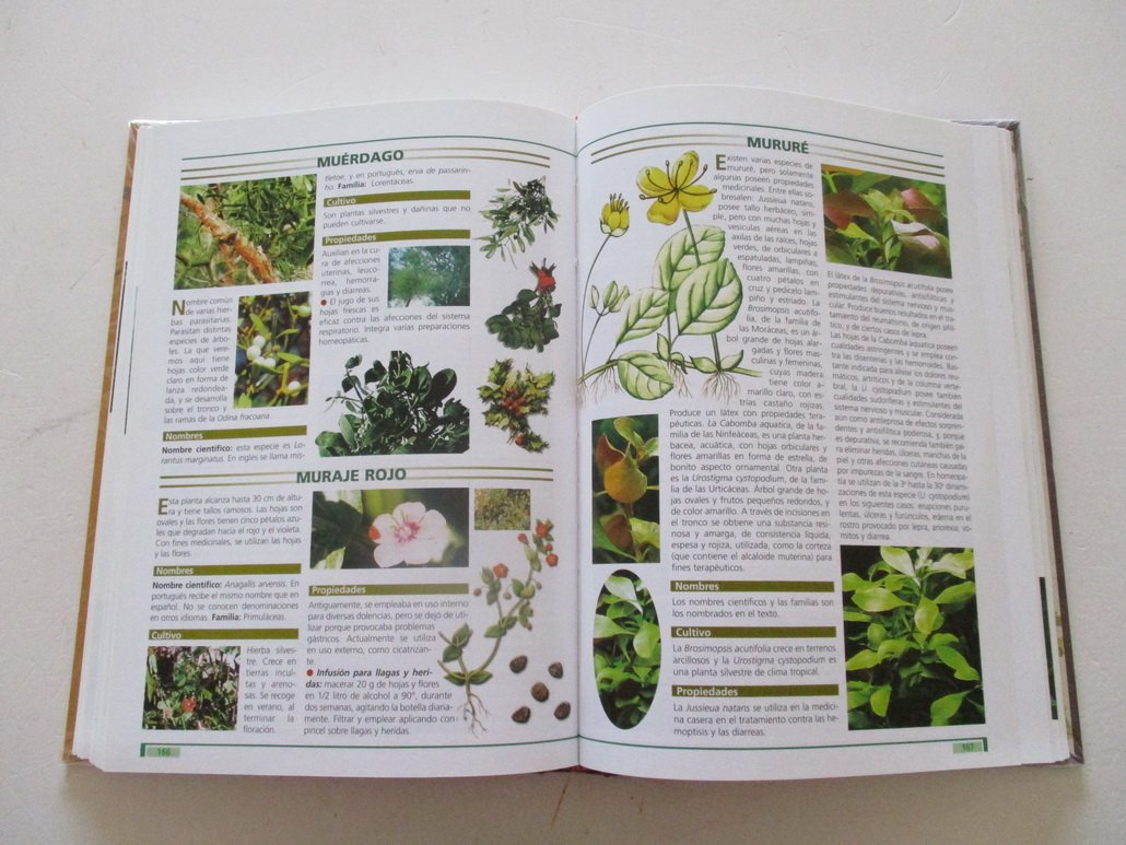Todo sobre las plantas curativas/ Everything About the ...