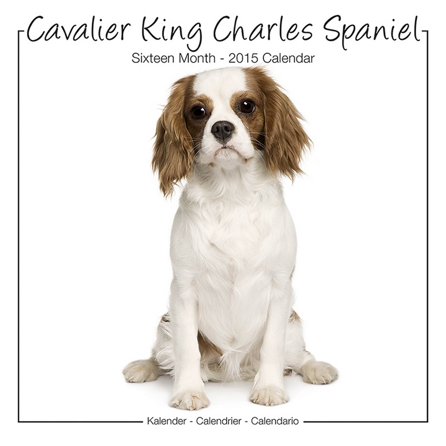 Cavalier king charles spaniel calendar dog breed calendars 2018 cavalier king charles spaniel calendar dog breed calendars 2018 dog calendar calendars 2017 2018 wall calendars 16 month wall calendar by avonside nvjuhfo Image collections