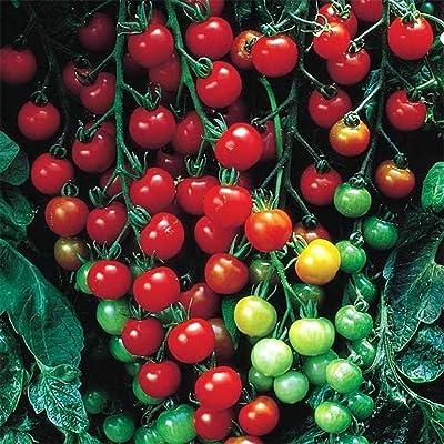 Bravet 50Pcs Home Garden Balcony Organic Delicious Fruit Cherry Tomato Seeds Fruits : Garden & Outdoor