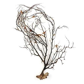 UEETEK Adorno Coral negro natural pecera acuario mar ventiladores Coral decoraciones: Amazon.es: Hogar
