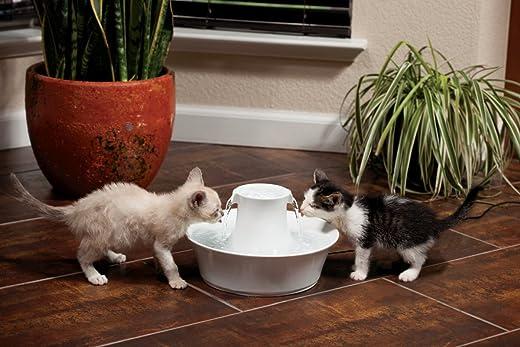 Fontaine à eau pour chats et chiens Drinkwell Avalon de Petsafe