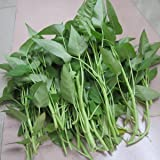 200 Aquatica Green Organic Vegetable Seeds ~Chris's garden