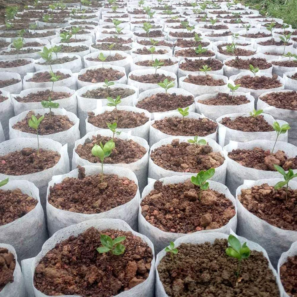 Macetas Pl/ántulas Tela No Tejida 3 Tama/ños Macetas Pl/ántulas Tela Biodegradables Bolsas Planta Vivero Bolsa Plantas Biodegradable 300 Piezas Bolsas Vivero No Tejidas Bolsa Pl/ántulas Tela