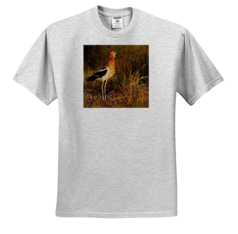 Birds American Avocet Calling ts/_314987 3dRose Danita Delimont Adult T-Shirt XL