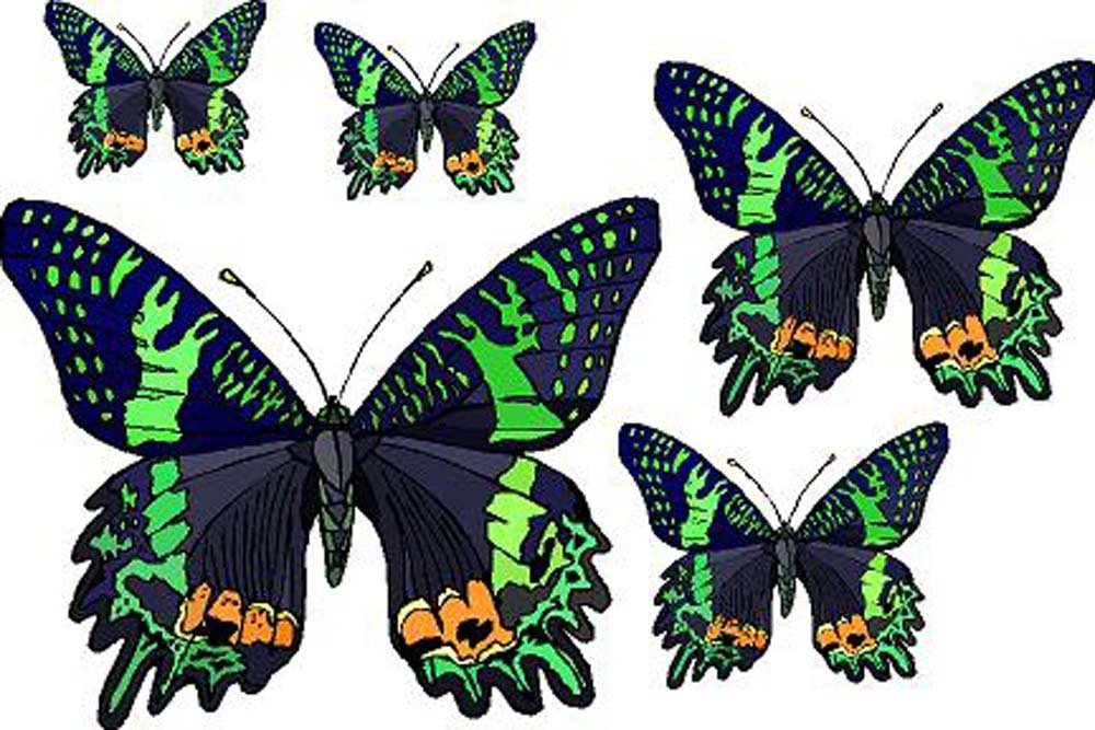 Set of 5 Black Butterflies with Green & Orange - Vinyl Stained Glass Film, Static Cling Window Decal