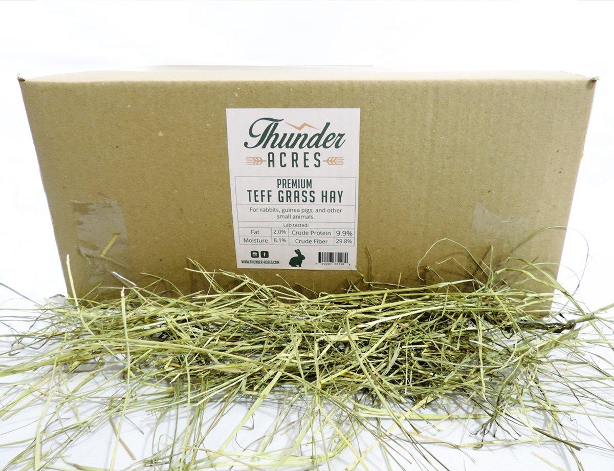 Premium Teff Grass Hay (20 lbs.) Thunder Acres