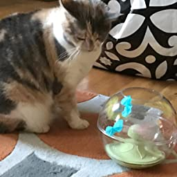 Amazon Com Customer Reviews Petlinks Electronic Motion Cat Toys Mystery Motion
