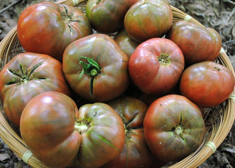 freies Verschiffen Erbschaft Variety Gr/Ã/Ÿen Nicht ohne Gentechnik AGROBITS 20K Samen oder 2 Oz: Cherokee Lila Tomatensamen