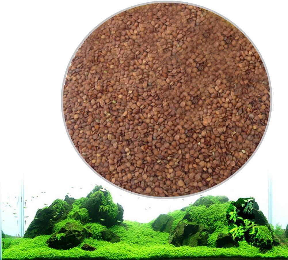 Zantec Semillas de plantas de acuario Decoraci/ón de hierba de agua acu/ática como Planta de primer plano de tanque de peces de jard/ín