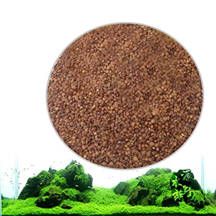 Leoie Aquarium Plant Seeds Aquatic Water Grass for Fish Tank Foreground Plant Decor