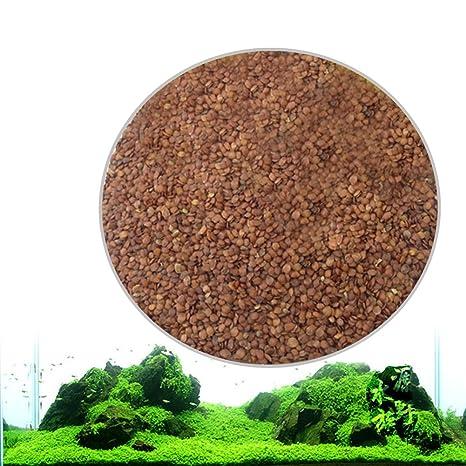 Zantec Semillas de plantas de acuario, Decoración de hierba de agua acuática como Planta de