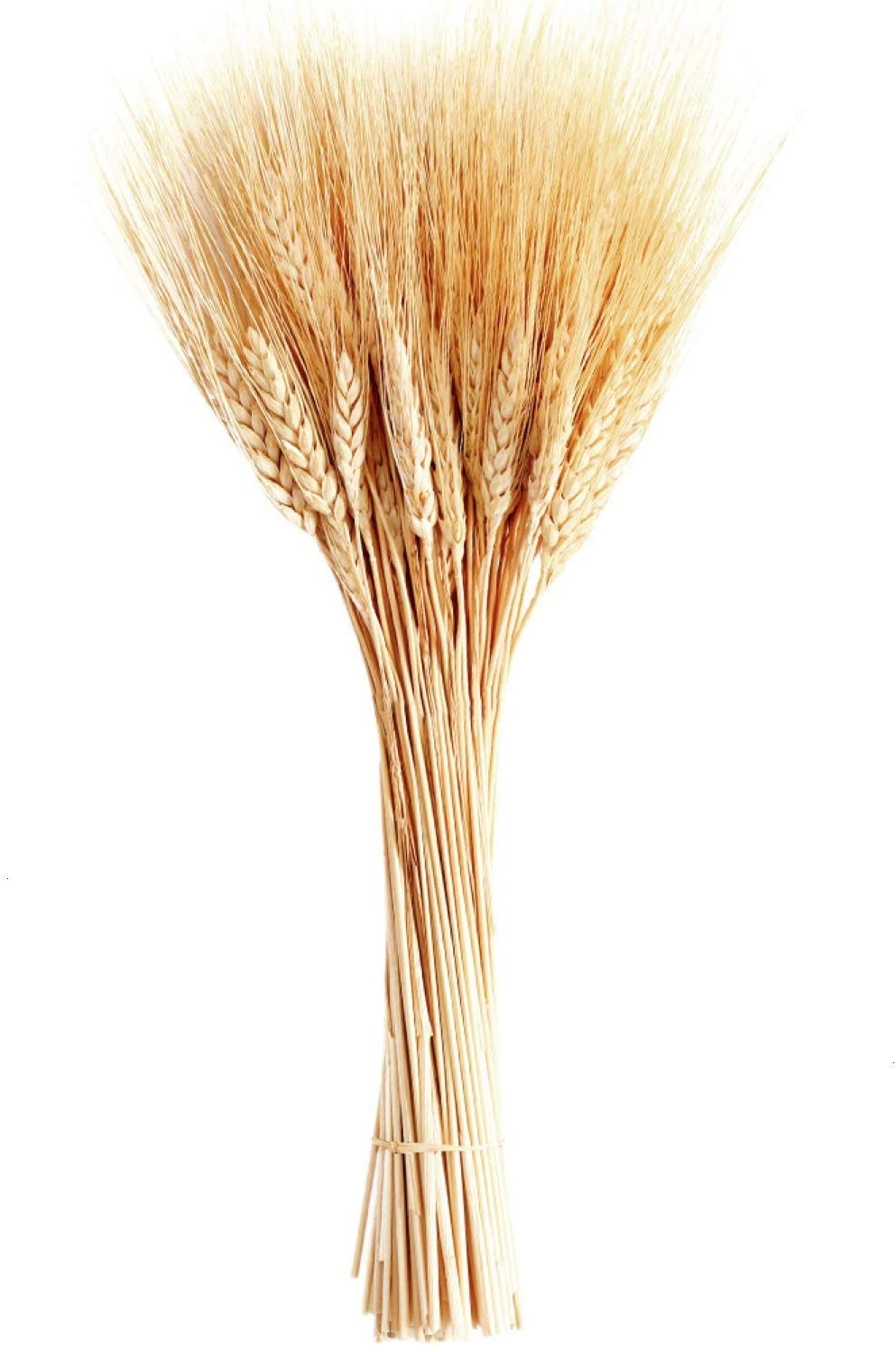 June Fox Dried Wheat Stalks, 100 Stems Wheat Sheaves for Decorating Wedding Table Home Kitchen (15.7 Inches)