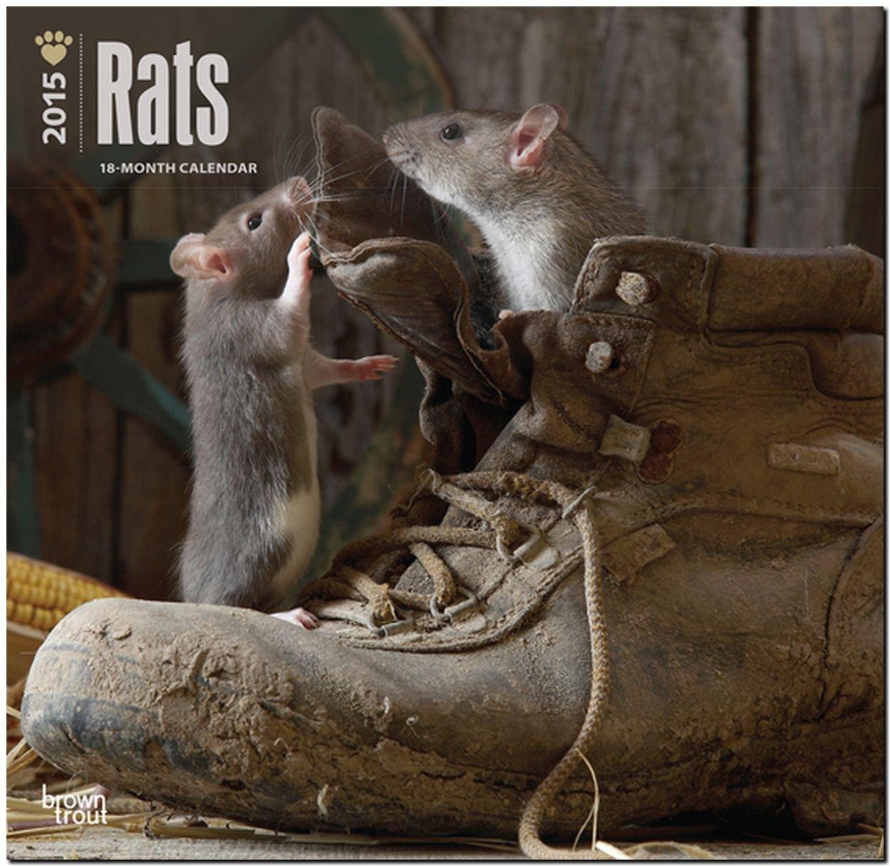 Rats 2015 - Ratten