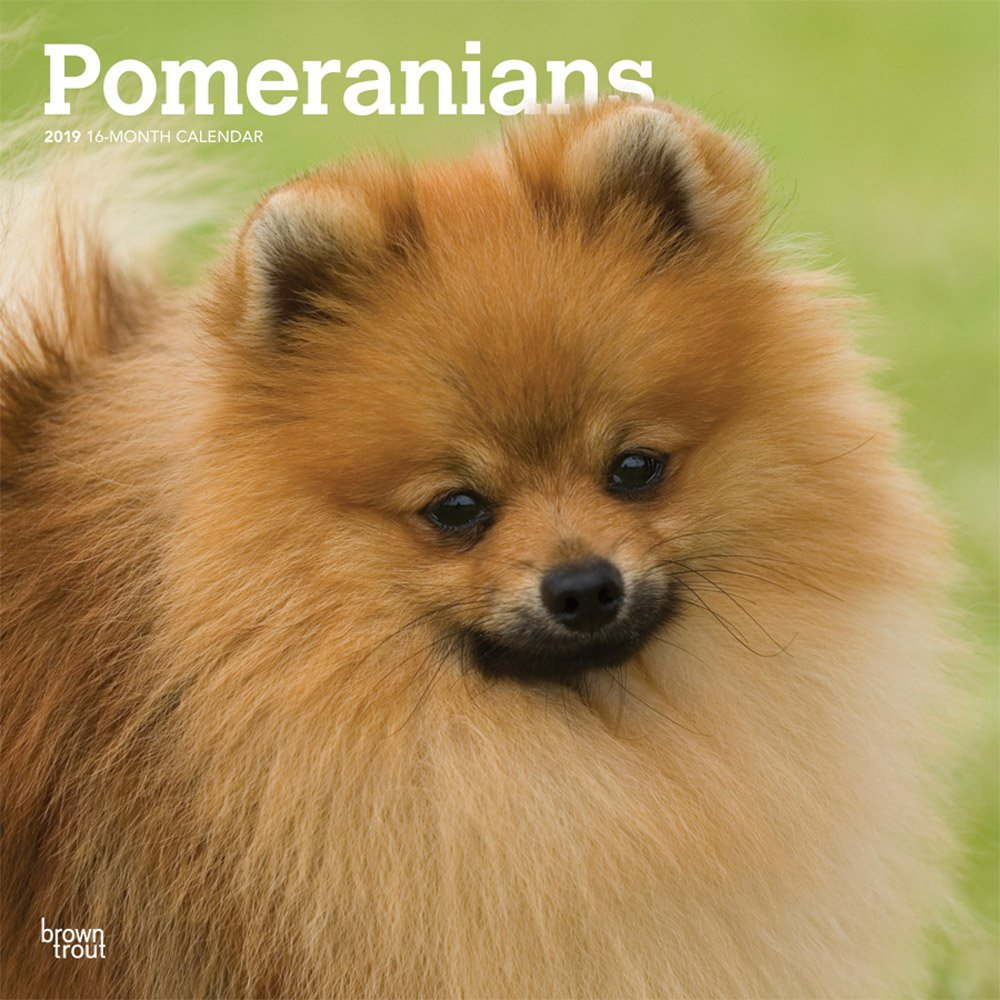 Pomeranians 2019 12 x 12 Inch Monthly Square Wall Calendar, Animals Small Dog Breeds (Multilingual Edition) ebook