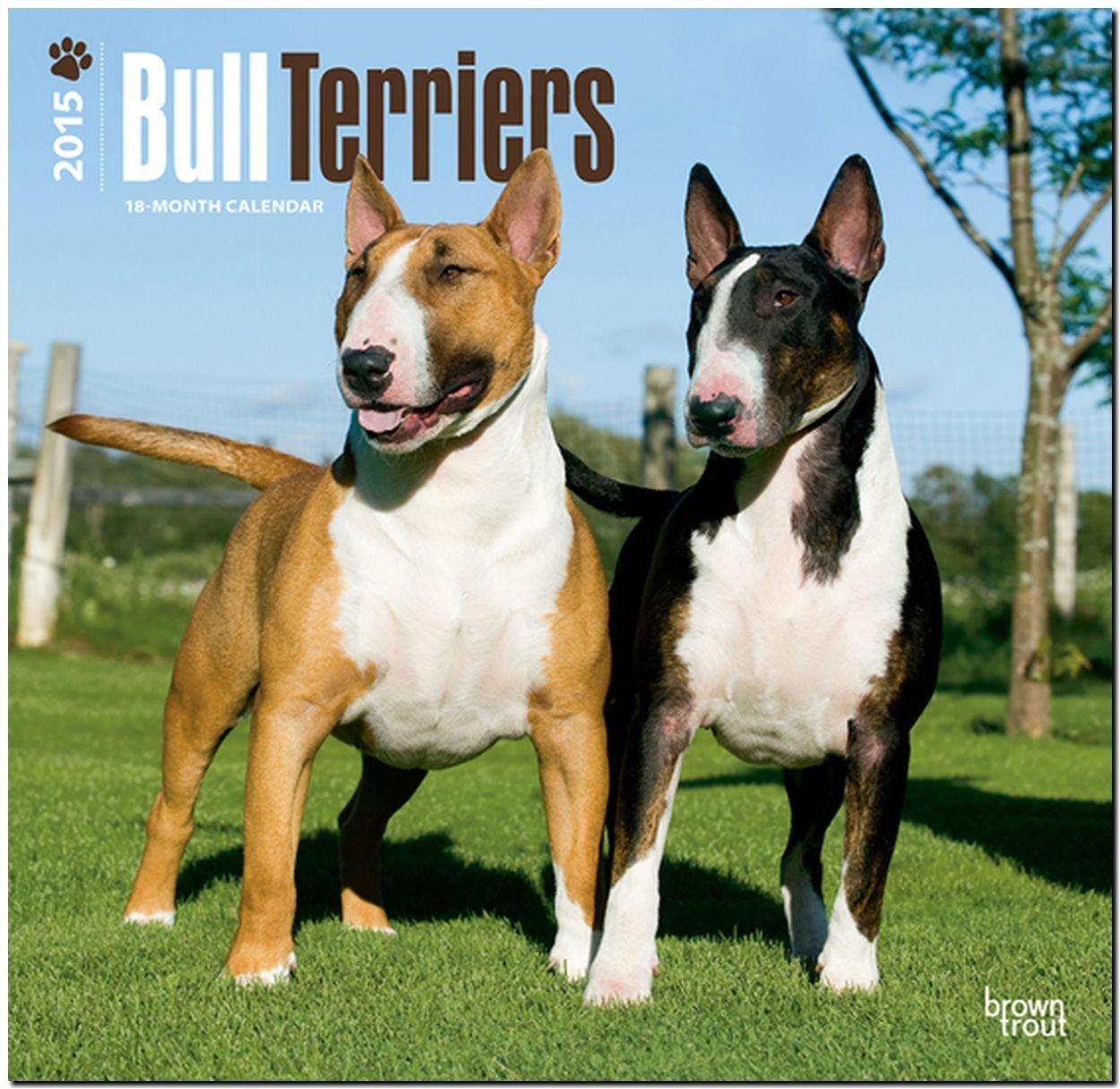 Bull Terriers 2015 - Bull Terrier