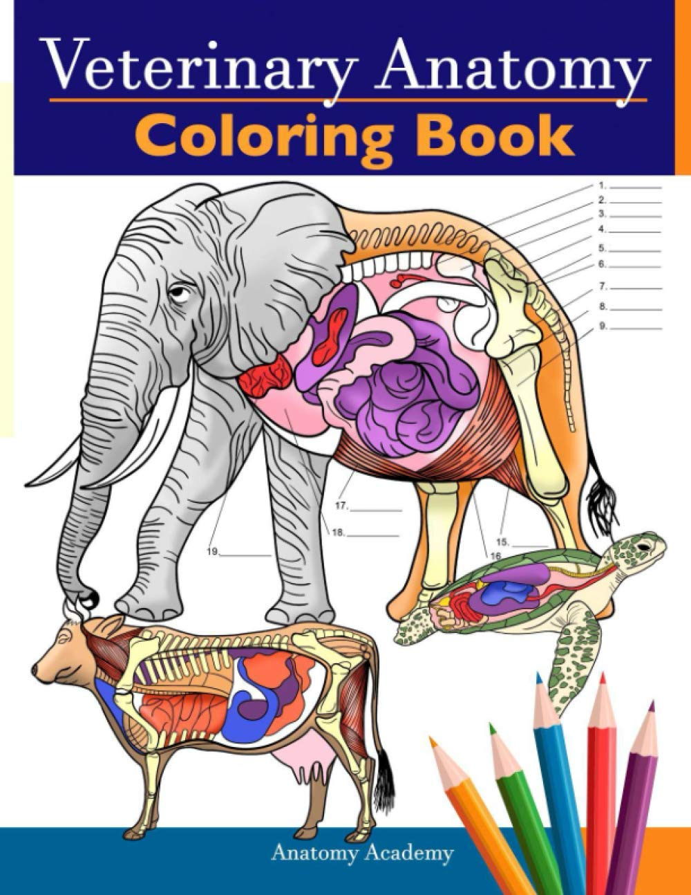 Amazon Com Veterinary Anatomy Coloring Book Animals Physiology Self Quiz Color Workbook For Studying And Relaxation Perfect Gift For Vet Students And Even Adults 9781838188603 Academy Anatomy Books