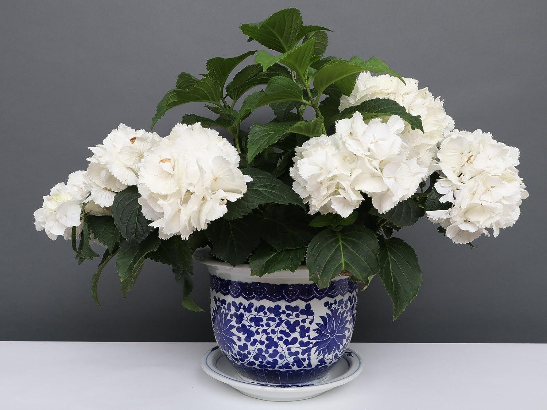 Porzellan Porzellan Blumentopf Blumenübertopf Pflanztopf Blau-Weiß Stil Ø 40cm P0063-6